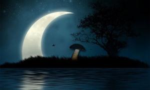 Влияет ли Луна на рост грибов?
