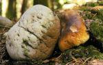 Подвиги грибов