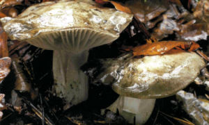 Наконец-то стоящий гриб