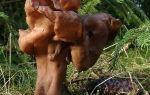 Мимо чего проходят грибники