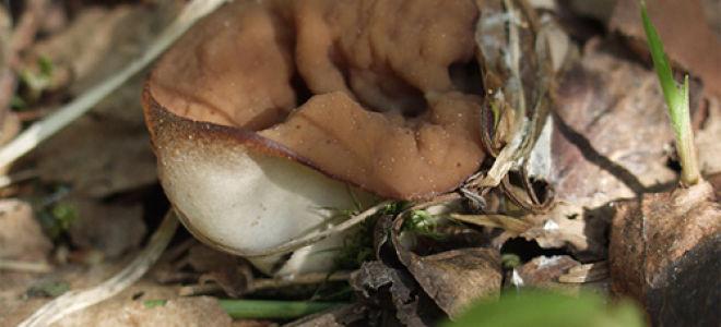 Уважайте труд грибов