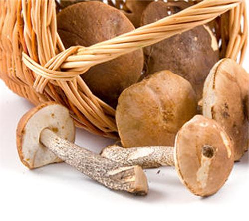 Питательная ценность грибов