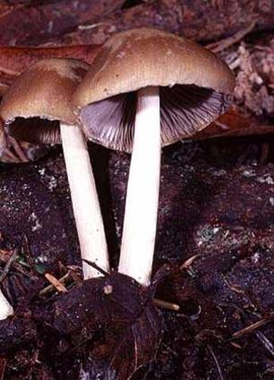 Два грибочка под окном