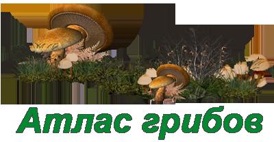 Атлас грибов